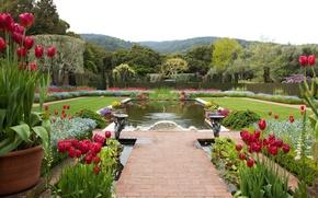 Картинка природа, дизайн, пруд, фото, ландшафт, сад, Калифорния, тюльпаны, США, Filoli