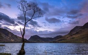 Картинка закат, горы, озеро, дерево