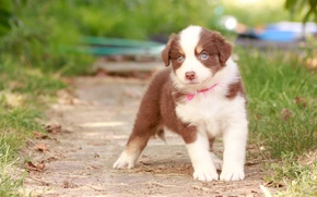 Картинка собака, щенок, боке