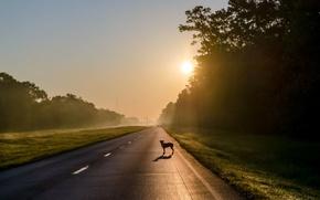 Картинка дорога, туман, друг, собака, утро