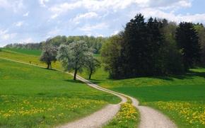 Обои дорога, поле, лето, пейзаж