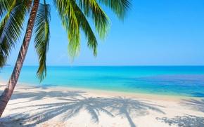 Картинка песок, море, пляж, пейзаж, отражение, пальма, голубое небо