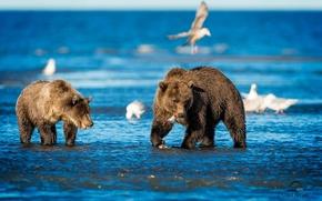 Картинка море, птицы, медведи
