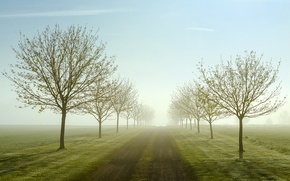 Картинка дорога, деревья, туман, поля, весна, утро