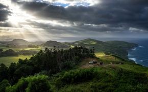 Картинка море, деревья, тучи, пасмурно, побережье, поля, коровы, Португалия, лучи солнца, луга, Azores