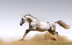 Обои животные, horses, dust, пыль, лошади, кони, песок