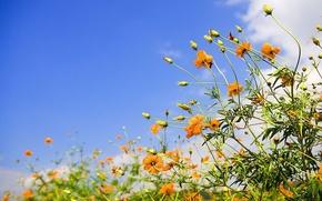 Обои небо, желтый, цветок