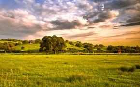 Обои деревья, трава, небо, поле, облака
