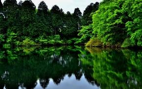 Обои деревья, озеро, отражение, зелень, природа
