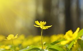 Картинка поле, лес, макро, свет, деревья, цветы, природа, дерево, весна, light, trees, field, nature, yellow, sunset, ...