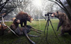 Картинка медведи, фотограф, лось, трофей