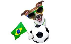 Картинка собака, очки, logo, dog, football, flag, funny, cool, World Cup, Brasil, FIFA, 2014