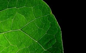 Картинка лист, Зелёный, чёрный фон
