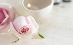 Обои цветок, нежность, роза, свеча