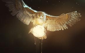 Картинка сова, птица, moon, Owl