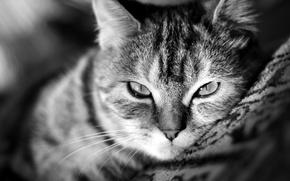 Картинка кошка, усы, взгляд, пол, киса, морда, обои, wallpaper, котэ, нос, палас, кот