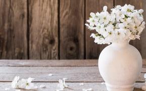 Картинка цветы, весна, лепестки