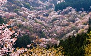 Картинка деревья, горы, весна, долина, цветущие