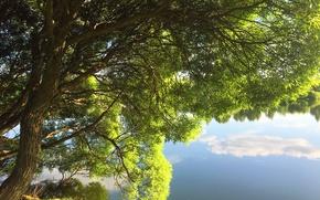Картинка лето, деревья, природа, озеро