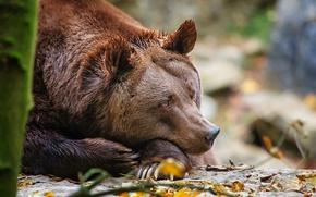 Картинка отдых, медведь, топтыгин