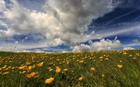 Картинка поле, небо, цветы, природа, степь