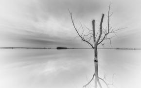 Картинка природа, река, фон, дерево