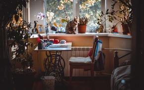 Обои кот, окно, девушки, комната