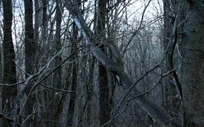 Картинка лес, ветки, мрачно