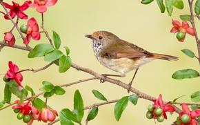 Картинка цветы, птица, ветка, Австралия, рыжелобая шипоклювка