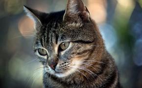 Картинка кот, блики, смотрит