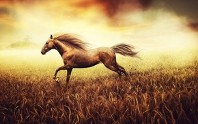Картинка поле, лошадь, бег, grass, nature, horse