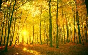 Картинка листья, солнце, лучи, деревья, пейзаж, ветки, желтый, красный, природа, фон, дерево, widescreen, обои, ствол, wallpaper, ...