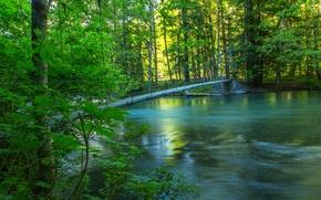Картинка лес, лето, мост, природа, река, фото