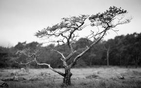 Картинка field, tree, countryside, cloudy, woodland, raining