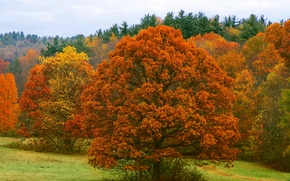 Картинка осень, лес, небо, листья, деревья, листва, багрянец