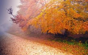 Картинка дорога, осень, природа, туман, дерево