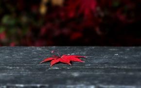 Картинка осень, листья, макро, красный, фон, widescreen, обои, листик, wallpaper, листочек, широкоформатные, background, macro, полноэкранные, HD …