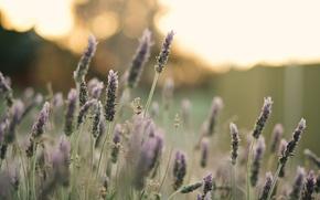 Картинка поле, цветок, макро, цветы, фон, розовый, widescreen, обои, растение, лепестки, wallpaper, цветочки, flower, широкоформатные, background, ...