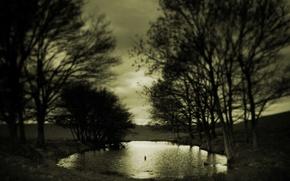 Картинка грусть, осень, деревья, сепия, Лужа