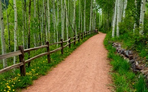Картинка дорога, лес, трава, деревья, цветы, природа, парк, весна, grass, forest, road, trees, nature, park, flowers, …