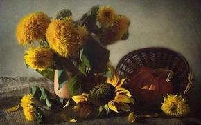 Картинка подсолнухи, желтый, текстура, тыква