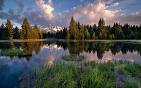 Картинка лес, вода, облака, деревья, горы, озеро, отражение, камыши, США, Grand Teton National Park