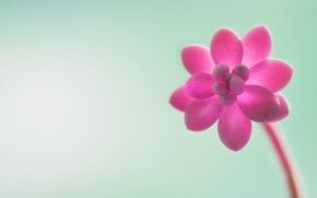 Картинка цветы, фон, итп