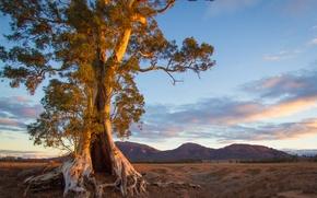 Обои австралия, южная, горы, дерево, вечер