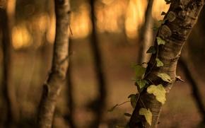 Картинка листья, макро, деревья, зеленый, фон, дерево, widescreen, обои, размытие, wallpaper, листочки, кора, широкоформатные, листики, background, …