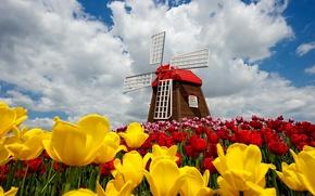 Картинка цветы, flowers, spring, ветряная мельница, clouds, природа, windmill, tulips, тюльпаны, облака, небо, sky, nature, весна
