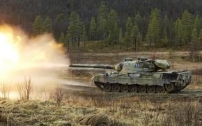 Картинка дорога, лес, выстрел, танк, деревья., Фотография