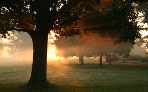 Картинка осень, лес, трава, листья, солнце, лучи, свет, деревья