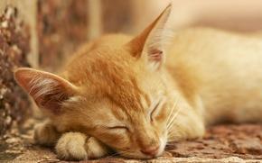 Картинка кот, отдых, сон, рыжий