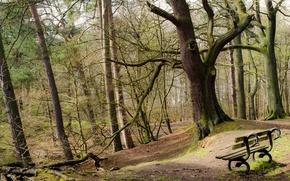 Картинка деревья, парк, скамья
